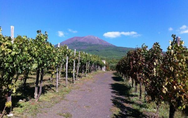 Os vinhos da Campânia